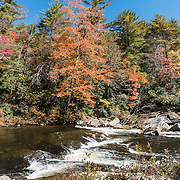 Enjoy vivid fall foliage colors along Linville River at Upper Falls Overlook in mid October in Linville Gorge Wilderness Area. Walk Erwins View Trail (1.8 miles round trip) to see Upper Linville Falls and the more-impressive Lower Falls, in Burke County, Pisgah National Forest, North Carolina, USA. Linville Falls drop 90 feet in a multi-level cascade, viewable from several overlooks along two trails starting from Linville Falls Visitors Center, run by the National Park Service. Directions: Turn eastwards at Mile Post 316.3 of the Blue Ridge Parkway (north of where US 221 crosses the Parkway and south of where NC 181 crosses). Linville River begins at Grandfather Mountain and enters the 12-mile Linville Gorge at Linville Falls. Linville Gorge, near the town of Linville Falls (66 miles north of Asheville), is the deepest and one of the most rugged and scenic gorges in the Eastern USA (qualifying for the nickname Grand Canyon of the East, along with more than a dozen chasms likewise tagged in other Eastern states). It is protected by Linville Gorge Wilderness Area, within Pisgah National Forest. Spared by its rugged terrain from clear-cutting in the early 1900s, Linville Gorge has some of the best remnant stands of uncut, old-growth forest in the southern Appalachians. This is one of the few places where the Rosebay, Catawba, and Carolina rhododendron grow side by side. This panorama was stitched from 3 overlapping photos.