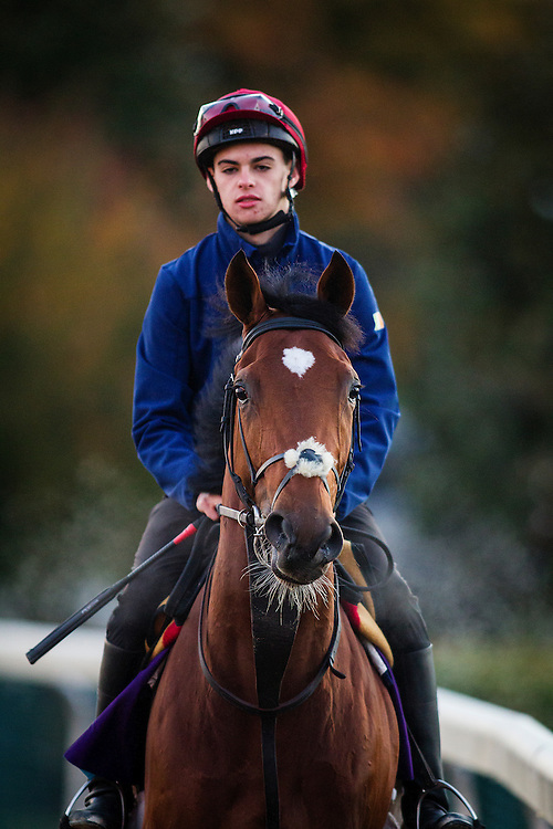 October 29, 2015:  Shogun (IRE), trained by Aidan P. O'Brien and owned by Derrick Smith, Mrs. John Magnier, Michael Tabor & Anne Marie O'Brien, exercises in preparation for the Breeders' Cup Juvenile Turf at Keeneland Race Track in Lexington, Kentucky. Alex Evers/ESW/CSM