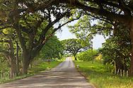 Country road in Guaos, Cienfuegos Province, Cuba.