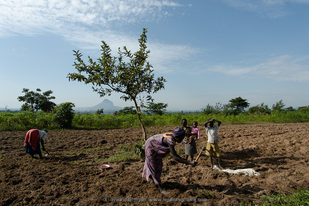 Women plantin groundnuts near Tororo, Uganda on 2 August 2014. Tororo Rock, the dominant feature of the landscape, can be seen on the horizon.