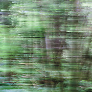 OR02334-00...OREGON - Abstract view of a forest in Ecola State Park.