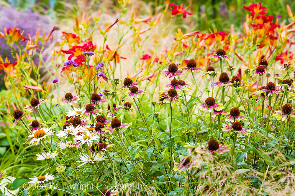 A vibrant display at Bluebell Cottage Gardens, Cheshire.