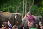 Elephants are taken to the river, through the village, for taking a bath. Pinnawala Elephant Orphanage in Sabaragamuwa Province of Sri Lanka. <br /> <br /> For the conscious visitor, a strange and uncomfortable feeling arises during the visit, as it can be easily mistaken with a zoo or a profitable business, which makes it hardly recommendable. <br /> <br /> Some animal welfare associations, such as Born Free, and elephant experts show strong disagreement with the management and request changes in the level of care, with concerns about chaining, transfers, breeding and the encouragement of visitors by the keepers to have direct contact with the animals, mainly motivated by the exchange of tips and not always positive for the elephant&yen;s wellbeing.