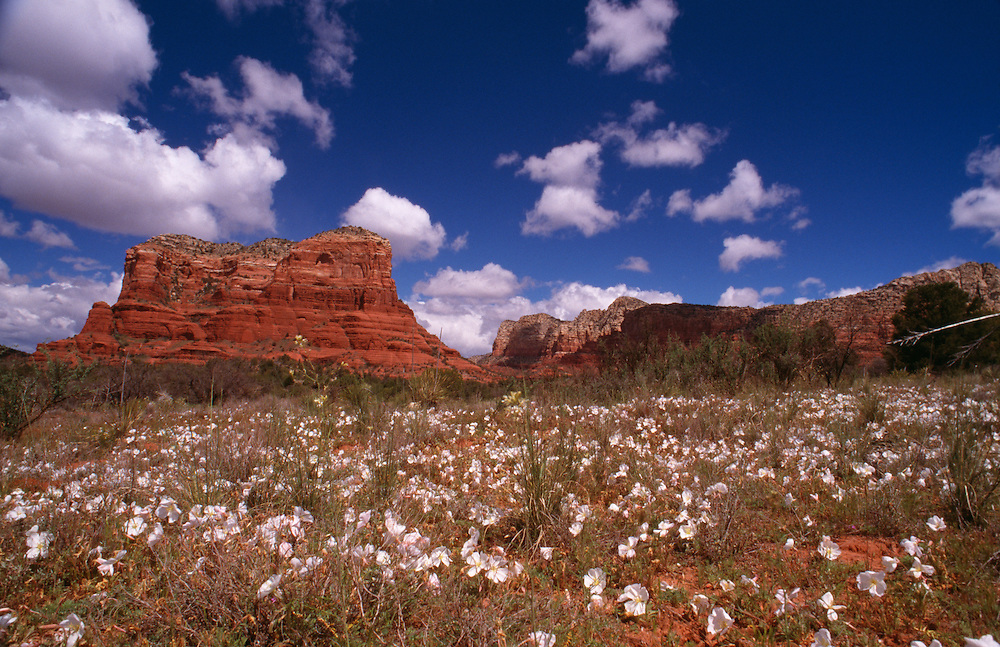 Arizona, Sedona, field with rock formation in background