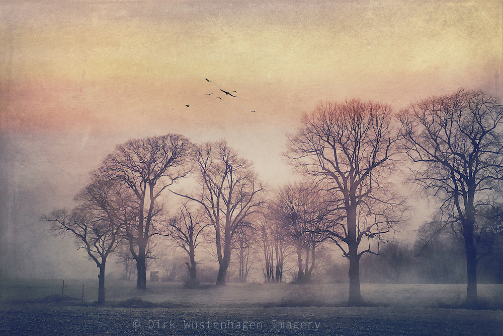 Misty rural landscape in morning light<br />