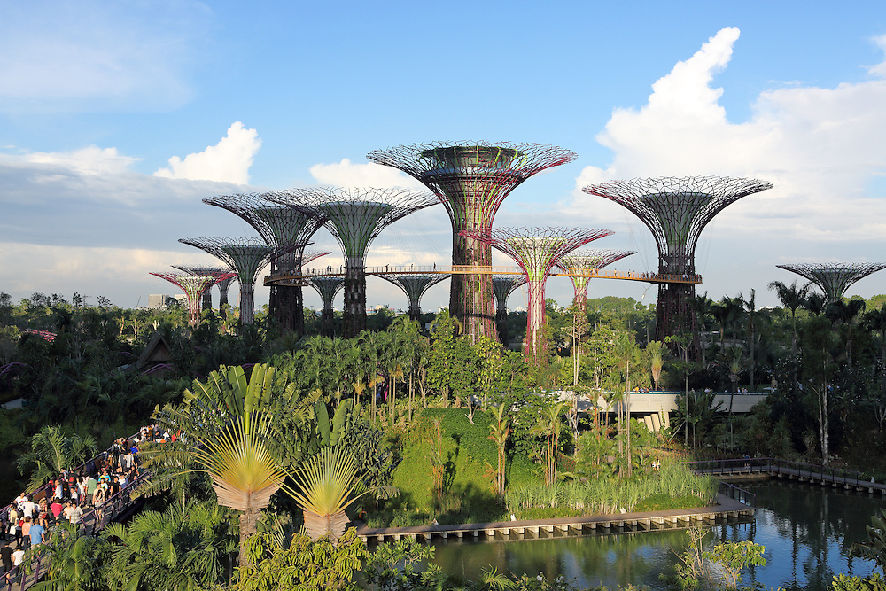 Supertree Grove in Gardens By The Bay, Singapore. Each of the 25-50 metre trees is covered in more than 200 species and varieties of bromeliads, orchids, ferns and tropical flowering climbers.