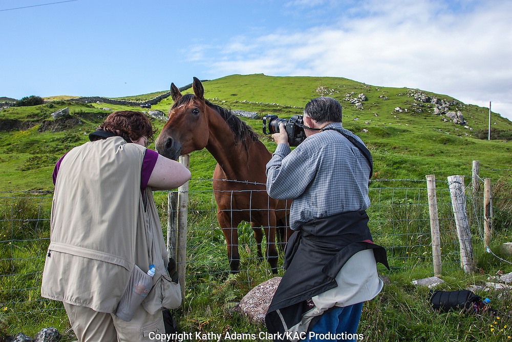 Horse looking over fence on Clare Island off coast of western Ireland.