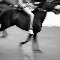 a horse at the san martino turn