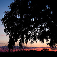LITTLE ST. SIMONS ISLAND, FL -- October 1, 2010 -- A tree swing is lit by sunset on Little St. Simons Island on Friday, October 1, 2010.   The 10,000 acres of marshland, beaches, and forests are a refuge for wildlife and vacationers alike with only 32 guests permitted a night.  (Chip Litherland for Bay Magazine)