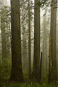 Del Norte Coast Redwood State Park, trees, California