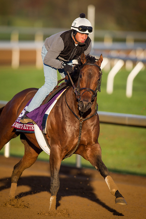October 29, 2015:  Bobby's Kitten, trained by Chad C. Brown and owned by Kenneth L. and Sarah K. Ramsey, exercises in preparation for the Breeders' Cup Turf Sprint at Keeneland Race Track in Lexington, Kentucky. Alex Evers/ESW/CSM