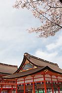Fushimi Inari shrine, with it's many red torii gates, and cherry blossom, in Inari, near Kyoto, Japan on Sunday 16th April 2012.