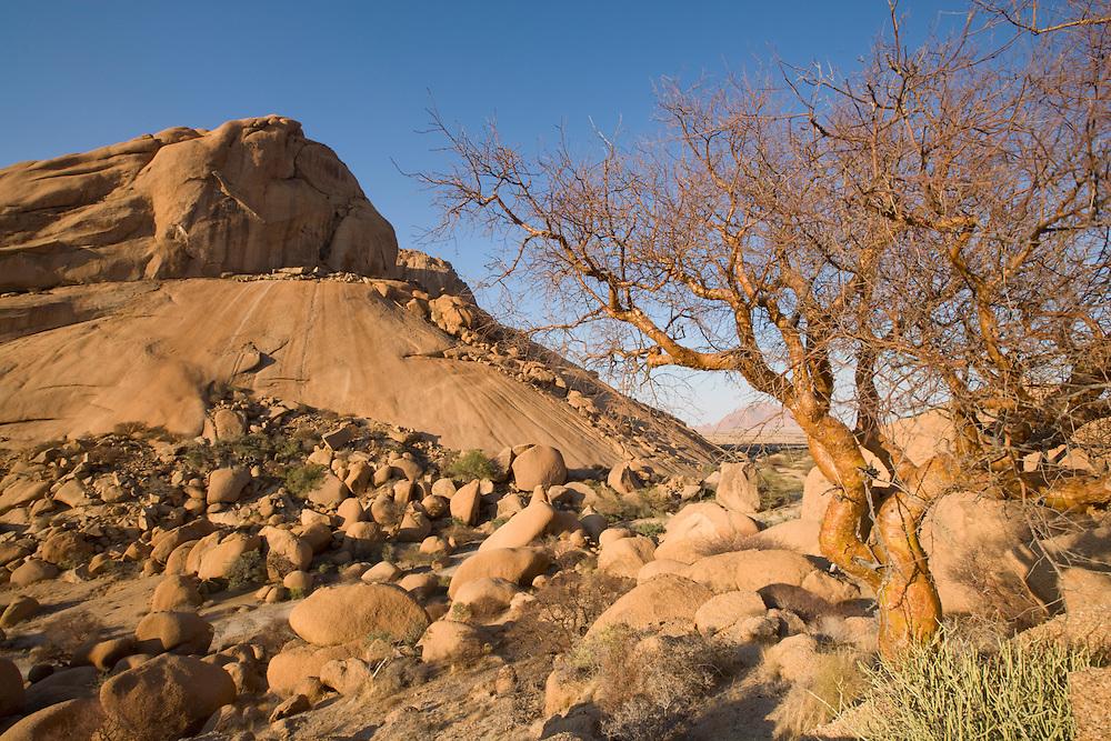 Africa, Namibia, Usakos, Morning sun lights Spitzkoppe mountain  and lone tree in Namib Desert