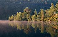 Scots pine and birch, Glen Affric, Scotland