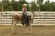 Cowgirl, Montana Mule Days, Drummond, Montana, donkey,  (Equus asinus), ass, <br /> MODEL RELEASED