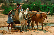 MEXICO, VILLAGE LIFE Village women hauling water by ox cart near Tehuantepec in Oaxaca State