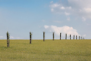 Row of Saplings forming an avenue with Stanway House Fountain at Coscombe corner on the Cotswold Way