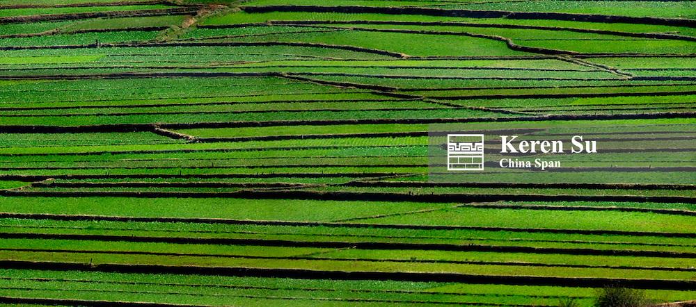 Landscape of green winter wheat lands, North Yunnan, China