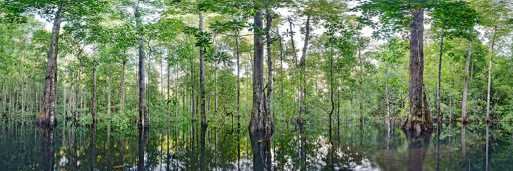 Mangrove Forest on Gam, Raja Ampat - Papua, 360° Panoramic View