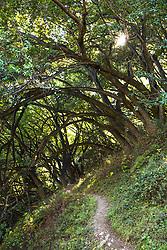 """Mill Creek Trail"" - Photograph of the Mill Creek Trail in Big Sur, California."