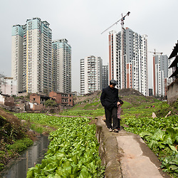 Chongqing - 30 gennaio 2011: un sito di costruzioni fa da sfondo ad un'area rurale nella zona settentrionale della città. Nelle periferie, i confini tra le aree urbane e quelle rurali offrono spesso accostamenti contrastanti tra diversi stili di vita. Chongqing - January 30, 2011:  a construction site right across a rural area in northern Chongqing. In the suburbs of the city the boundaries between rural and urban areas often offer contrasting views on the old and the new aspects of daily life.