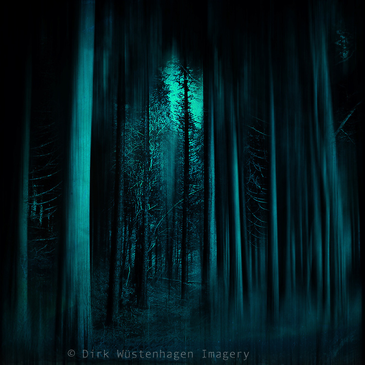 Dark spooky forest scene - digitally treated photograph<br />