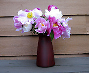 Vase filled with an assortment of beautiful spring Peonies.