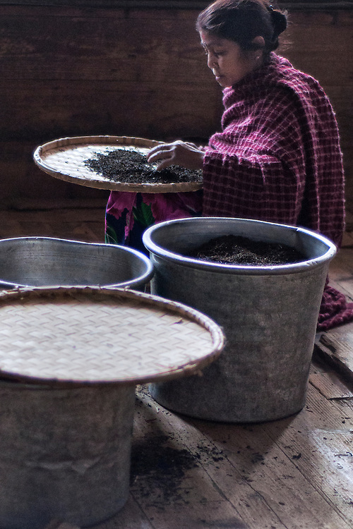 A woman in a tea factory inspects and sorts tea leaves.