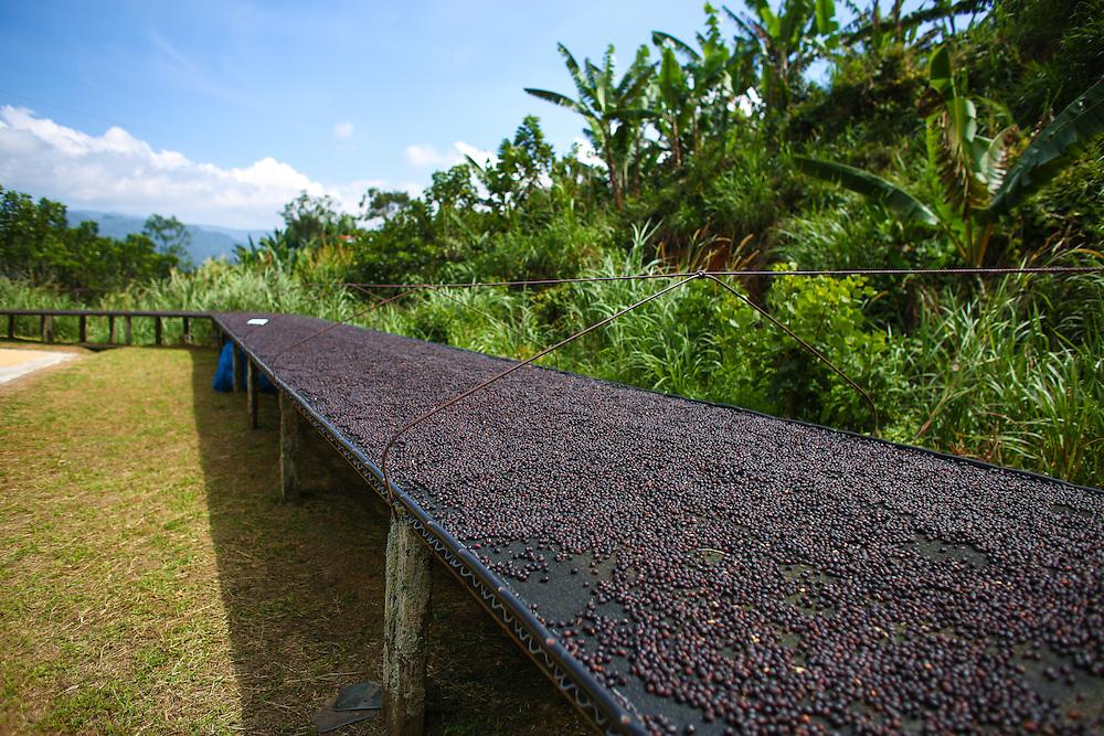 La Candelilla coffee farm photographed during the 2016 Starbucks Origin Experience for Partners. (Joshua Trujillo, Starbucks)