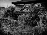 An abandoned house, undamaged by the earthquake, has been overrun by a second summer of weeds in the highly radioactive evacuated mountain village of Tsushima.  Decontamination has not even begun here because, according to the Education, Culture, Sports, Science and Technology Ministry, Tsushima will be exposed to annual radiation of more than 50 milli-seiverts (a normal annual dose of radiation from natural sources in 2.4 milli-seiverts).  Namie-machi, Fukushima Prefecture, Japan.