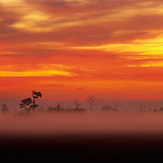 Early morning fog in Everglades National Park, FL.