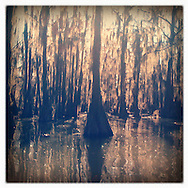 Uncertain, Texas - Caddo Lake State Park