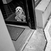 2011 October 26 - Dog in a doorway, Fremont, Seattle, WA, USA. Copyright Richard Walker