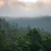 Composite images of scarlet macaws flying over the Mountain Pine Ridge near Quacamallo Bridge , Belize