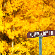 "SHOT 9/23/14 3:31:59 PM - A street sign for Mountainjoy Lane against the brilliant backdrop of aspen leaves changing color near Rollinsville, Co. in the Arapaho National Forest. Aspens are trees of the willow family and comprise a section of the poplar genus, Populus sect. Populus. The Quaking Aspen of North America is known for its leaves turning spectacular tints of red and yellow in the autumn of the year (and usually in the early autumn at the altitudes where it lives). This causes forests of aspen trees to be noted tourist attractions for viewing them in the fall. These aspens are found as far south as the San Bernardino Mountains of Southern California, though they are most famous for growing in Colorado. Autumn leaf color is a phenomenon that affects the normally green leaves of many deciduous trees and shrubs by which they take on, during a few weeks in the autumn months, one or many colors that range from red to yellow. The phenomenon is commonly called fall colors and autumn colors, while the expression fall foliage usually connotes the viewing of a tree or forest whose leaves have undergone the change. In some areas in the United States ""leaf peeping"" tourism between the beginning of color changes and the onset of leaf fall, or scheduled in hope of coinciding with that period, is a major contribution to economic activity. (Photo by Marc Piscotty / © 2014)"