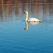 &quot;Self Reflection&quot;<br />