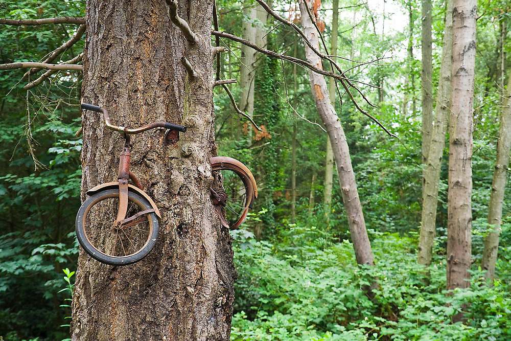 """The famed """"Bicycle Eaten by A Tree"""" tucked in the woods right off the Vashon Highway on Vashon Island, Washington."""
