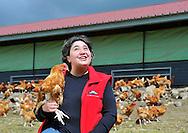 28/04/14 - LAPEYROUSE - PUY DE DOME - FRANCE - Elevage de poulet fermier bio de Karine LEMONNIER - Photo Jerome CHABANNE