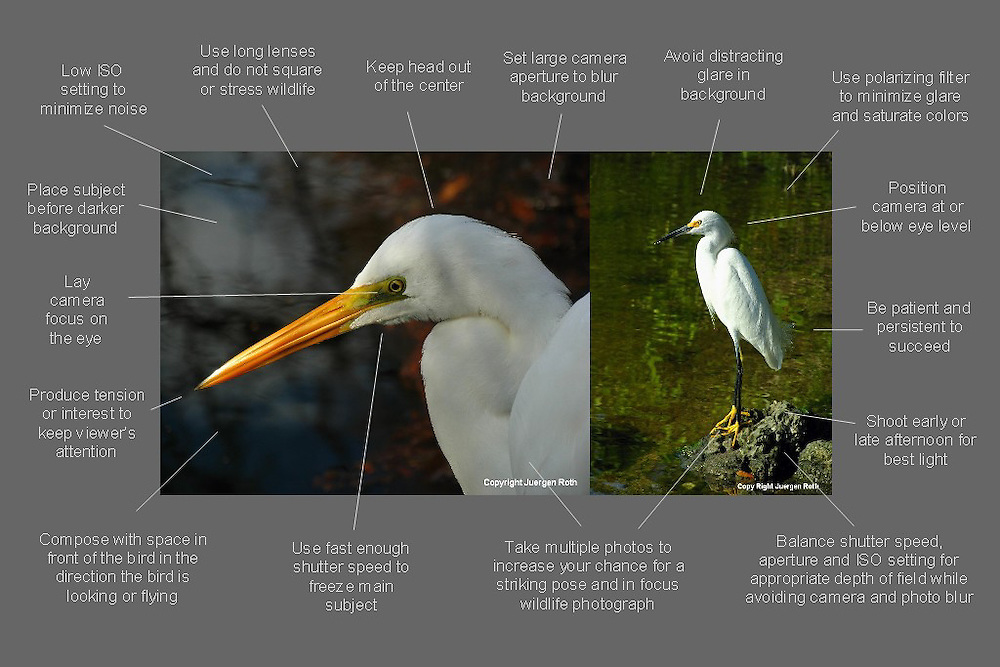 How to take better bird photos - a free photo tip cheat sheet ready for download.