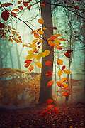 Colourful autumn leaves on a misty day - texturized photograph