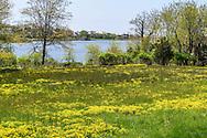 Agawam Lake, 137 Pond Ln, Southamprotn, NY