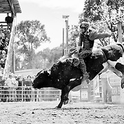A bull rider gets shouts of encouragement from a cowboy on the gate.<br />
