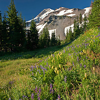 OR01690-00...OREGON - Mount Hood and Barrett Spur from the wildflower covered meadows of Elk Cove in the Mount Hood Wilderness Area.