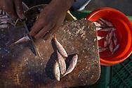 Barbunya or red mullet at the fish market in Giresun
