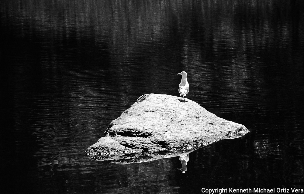 Bird on a rock looking left.