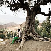 Tsegay Kiros, 19, seats by an ancient olive tree in Adi Sibhat, Tigray, Ethiopia.