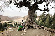Tsegay Kiros, 19, seats by an ancient olive tree in Adi Sibhat, Tigray, Ethiopia.