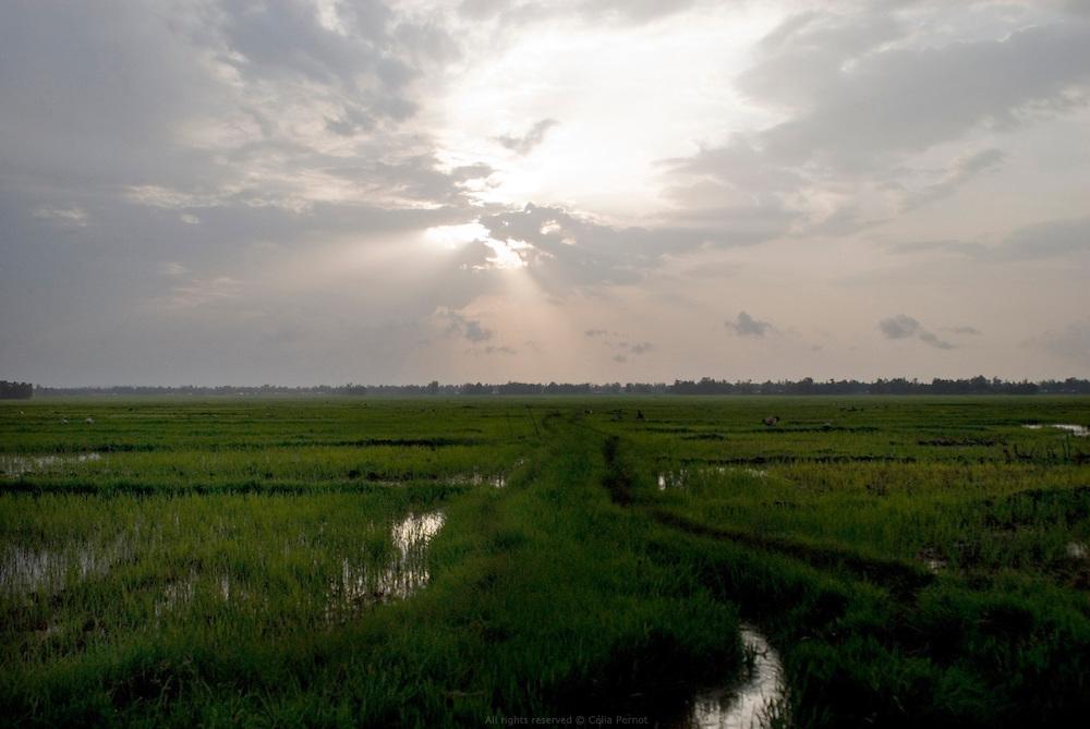 """Pendant la saison des pluies, les terres qui bordent le Lac Tana sont inondées. Avec l'aide des Nord-coréens, le ministère de l'agriculture introduit la culture du riz en 1978 afin de profiter astucieusement de cet excédent d'eau et de tenter de remédier au dépeuplement de la région. Ces zones désertées commencent petit à petit à se repeupler. On compte aujourd'hui des centaines d'hectares de rizières. À l'est du Lac Tana, Wereta est un """"nouveau village"""" de cultivateurs nommé par la variété de riz qui a relancé l'économie locale. »Éthiopie août 2011."""