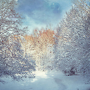 Snow covered landscape a sunrise - textured photograph<br /> Redbubble products: http://www.redbubble.com/people/dyrkwyst/works/19801418-white-blanket