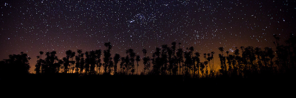 A row of trees is silhouetted against the night sky in Hawaii